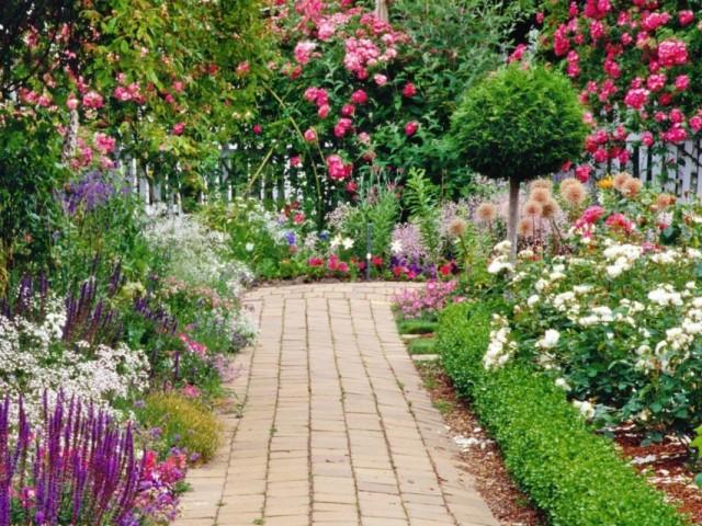 Растения-цветотерапевты для особых уголков сада