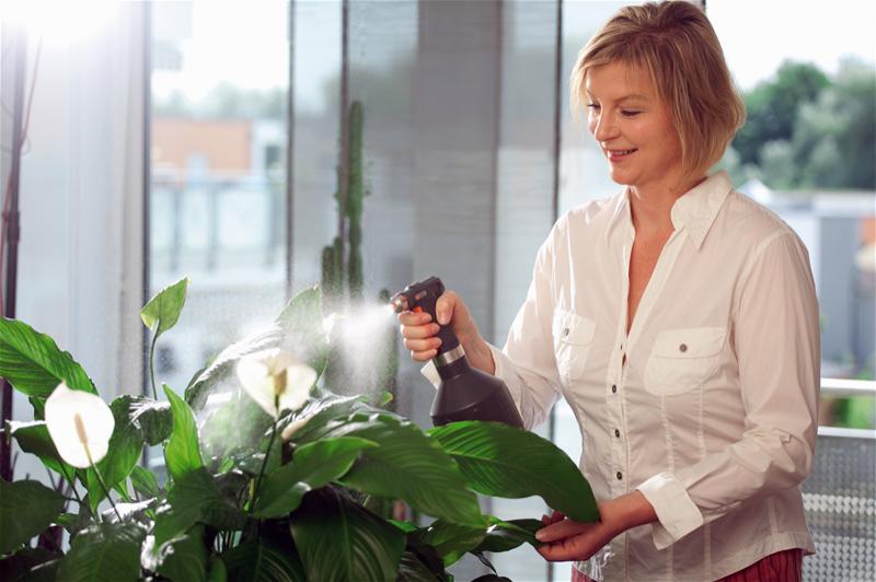 Сенсация! После такого опрыскивания комнатные цветы растут в 2 раза быстрее!