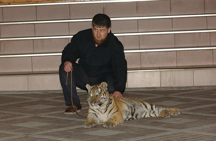 Михаил Макогон. Бумажный тигр Кадыров – зачем власть делает из него грозу России?