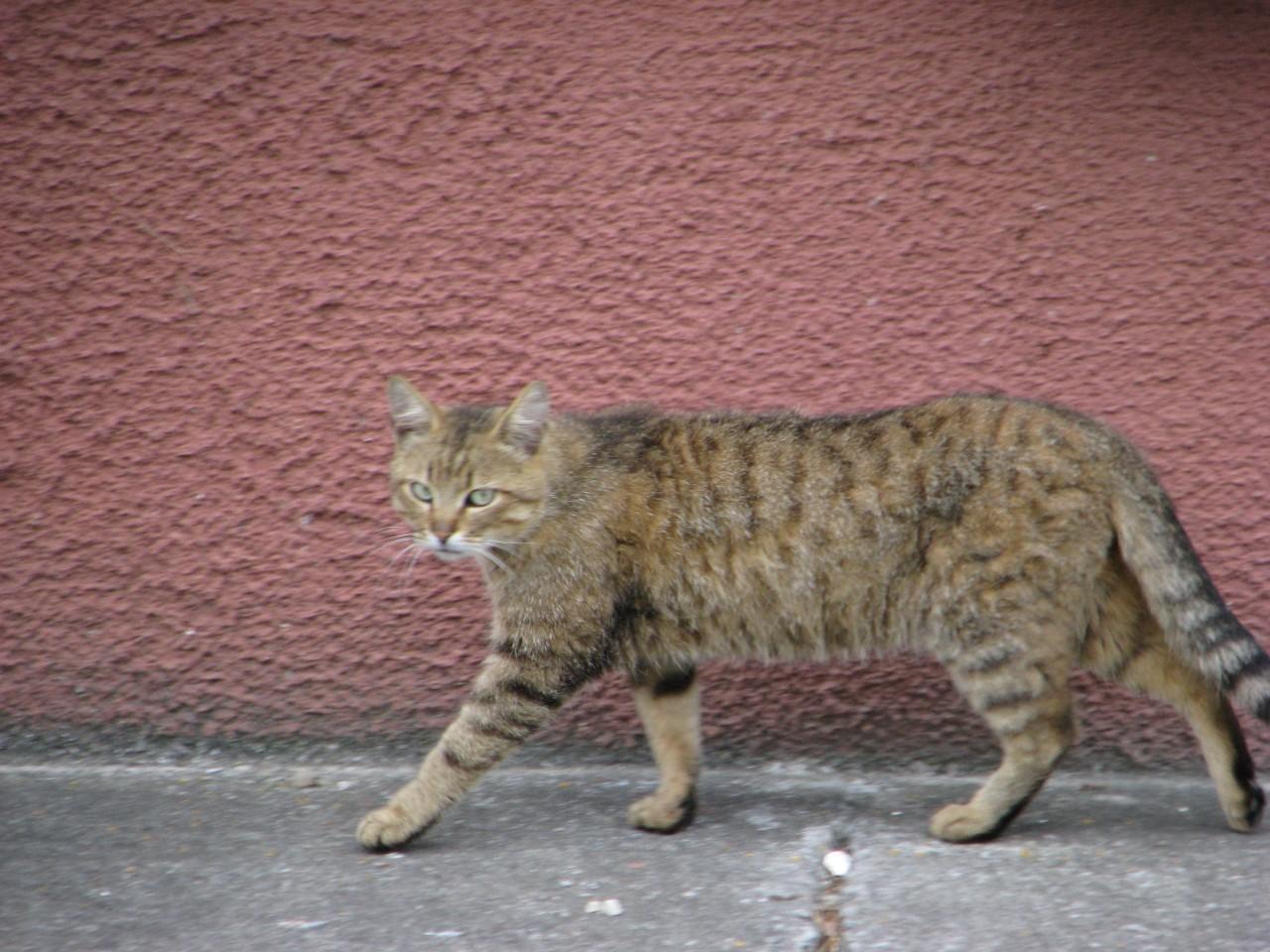 Братья наши меньшие: кошка за стеклом