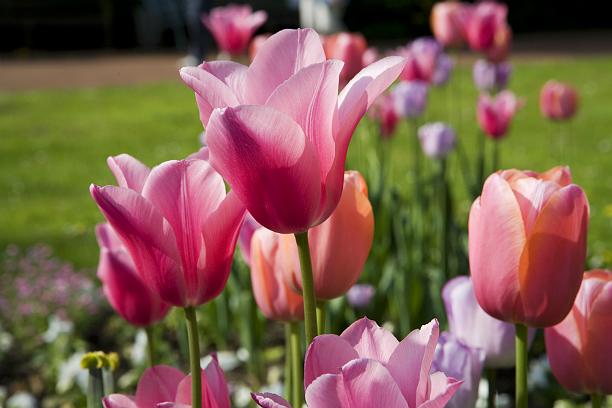 Какие цветы посадить на клумбе?