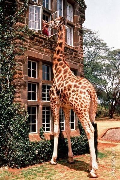 Рядом с этими животными становится понятно — насколько мы малы и уязвимы!