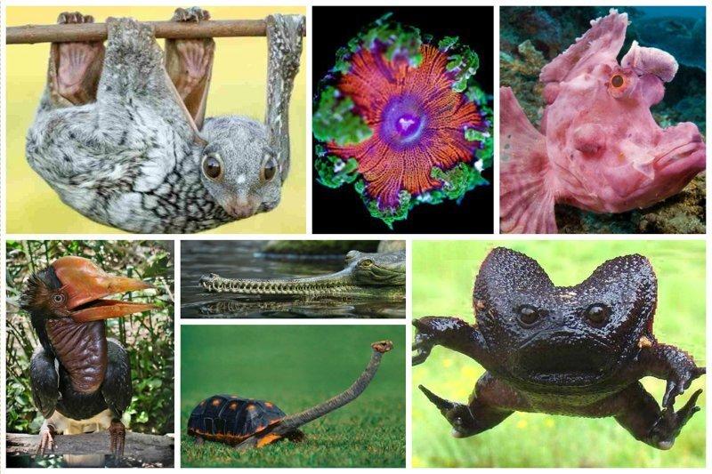 20 невероятно странных животных нашей планеты