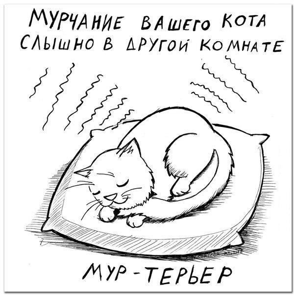Определяем породу кошки по ее характеру