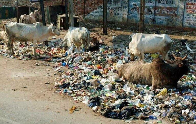 Почему Индия такая грязная? вопросы и ответы, индия, интересно, интернет, поиск, факты