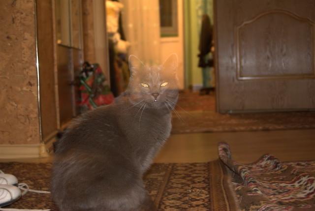 Умерший кот-спаситель. На кухне у нас стоит старая газовая плита. Ручки, посредством которых регулируется…