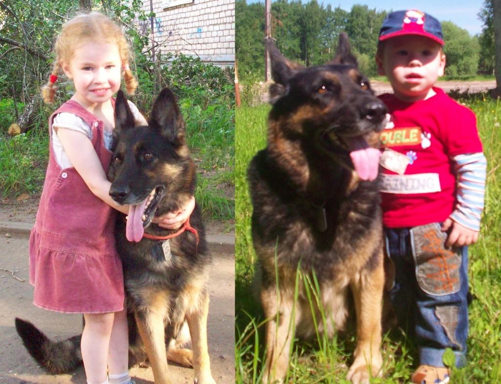 Немецкая овчарка фото с детьми