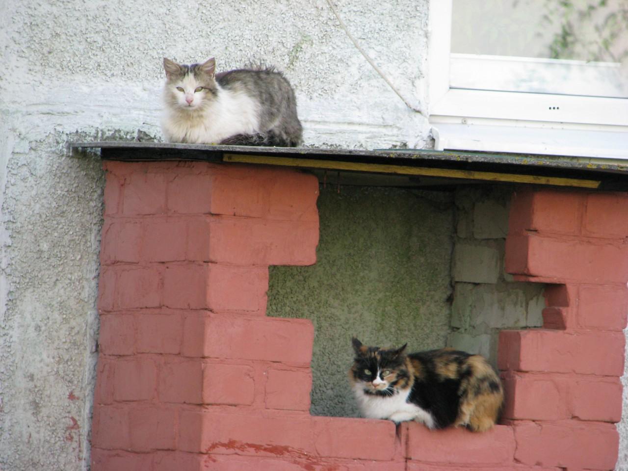 Братья наши меньшие: возьми себе кошку