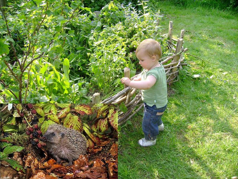 Ленивый сад — идеальное решение для маленького участка