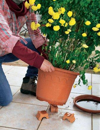 Как зимовать растениям в горшке на даче