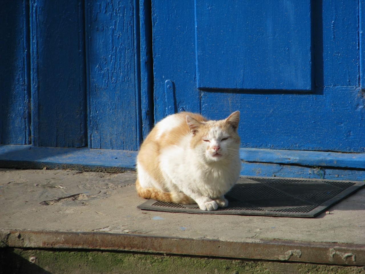 Братья наши меньшие: так почему в Египте поклонялись кошке?