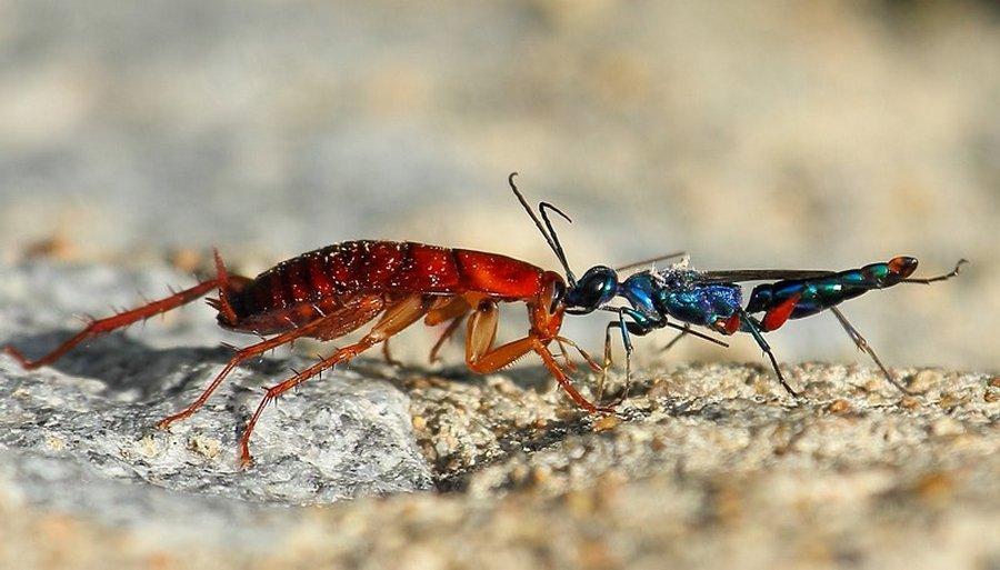 На что способны паразиты (11 фото)