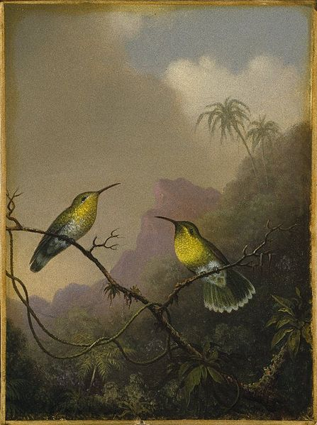 "File:Brooklyn Museum - Two Humming Birds ""Copper-tailed Amazili"" - Martin Johnson Heade.jpg"