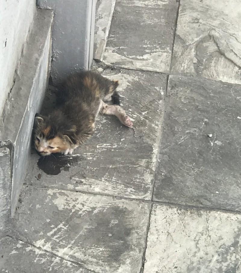 Крошечный котенк умирал на улице...Спасибо  девушке, которая не прошла мимо, как остальные люди!