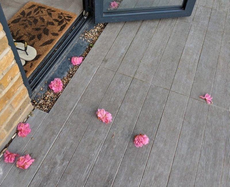 Рози из Великобритании переехала в новое место и через некоторое время стала замечать цветы на своём пороге в мире, история, люди, поклонник, цветы