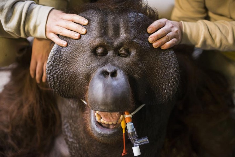 Фотографии животных...