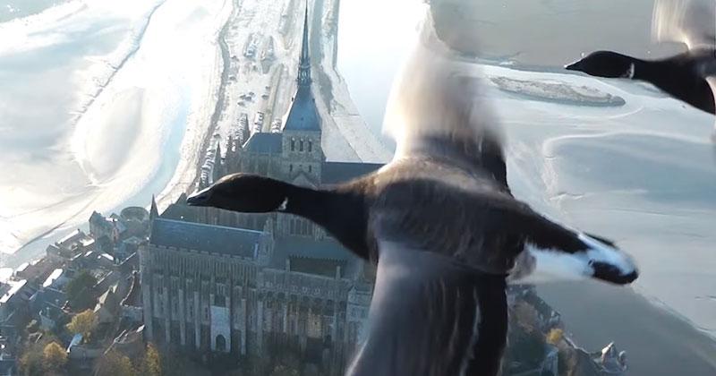 Взгляните на землю глазами птиц. Человек заснял уникальное видео на высоте!