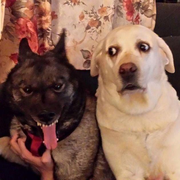 Уморительные собачки