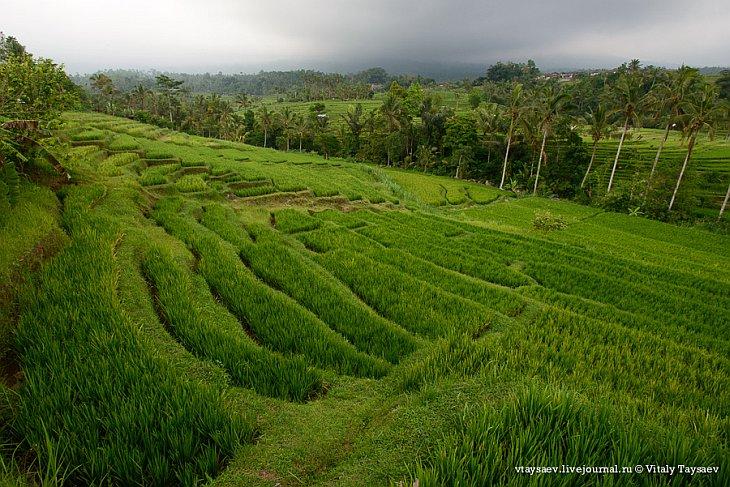 Рисовые террасы в Индонезии — всемирное наследие ЮНЕСКО