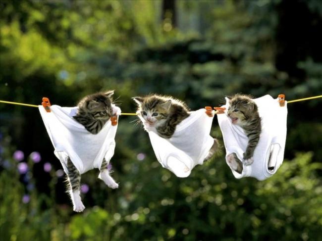 15 причин завести котика