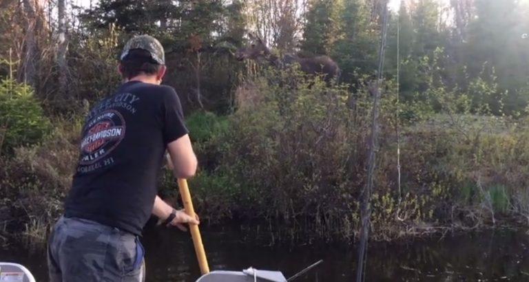 Рыбаки заметили тонущего лосенка и бросились на помощь