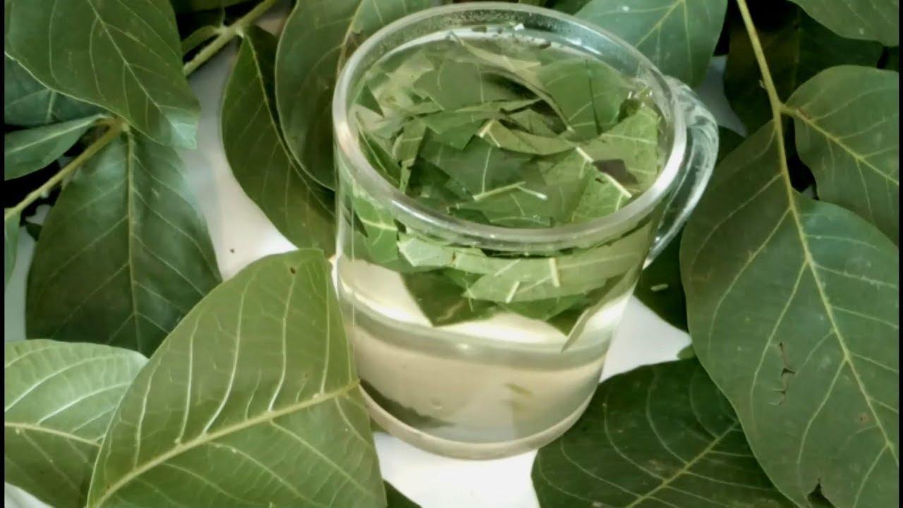 В мае и июне собираем листья грецкого ореха и укрепляем ими здоровье