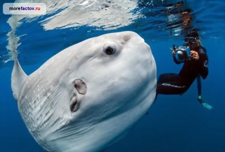 океан рыбалка фильм
