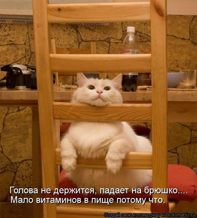 kotomatritsa_iA (634x700, 279Kb)