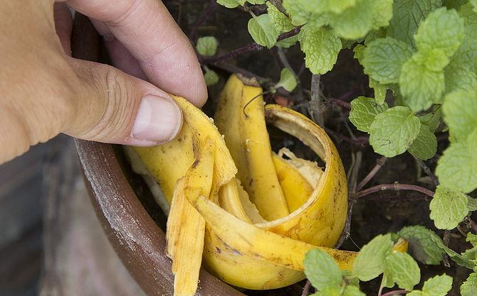 Нестандартные способы использования банановой кожуры