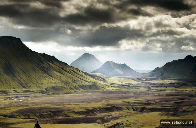 Мир природы Александра Дешоме