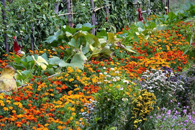 Как совместить приятное с полезным: цветы на овощной грядке