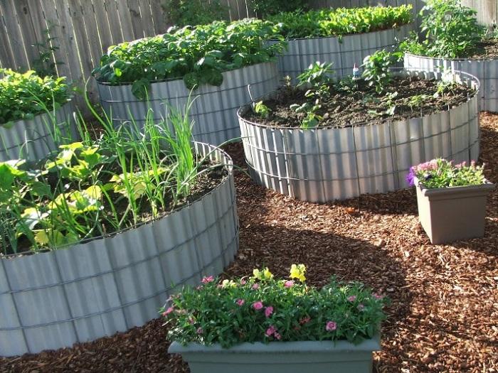 Металлические листы, используют в качестве грядки для высадки рассады на огороде.