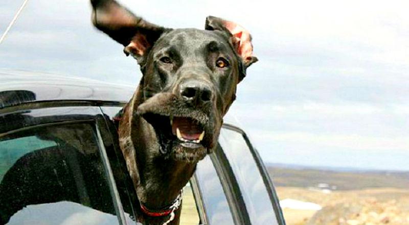 29 собак, которым в лицо бьет ветер