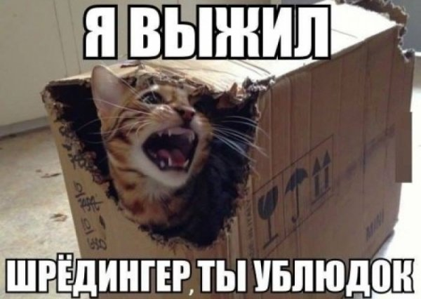 Гройсман и кот Шредингера