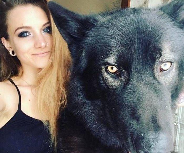 Гибриды волка и собаки
