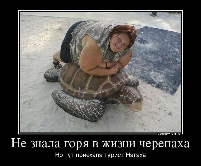 Не знала горя в жизни черепаха, но тут приехала турист Натаха демотиватор, демотиваторы, жизненно, картинки, подборка, прикол, смех, юмор