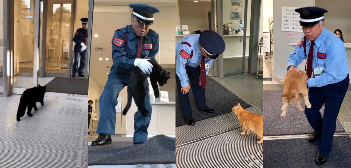 Эти два кота в Японии уже не…