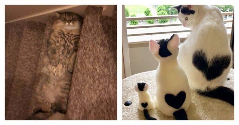 Очаровательные котейки