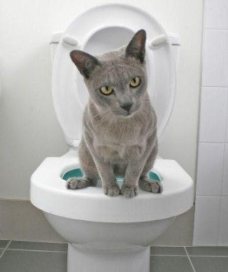 Владельца кошки всегда можно определить по запаху