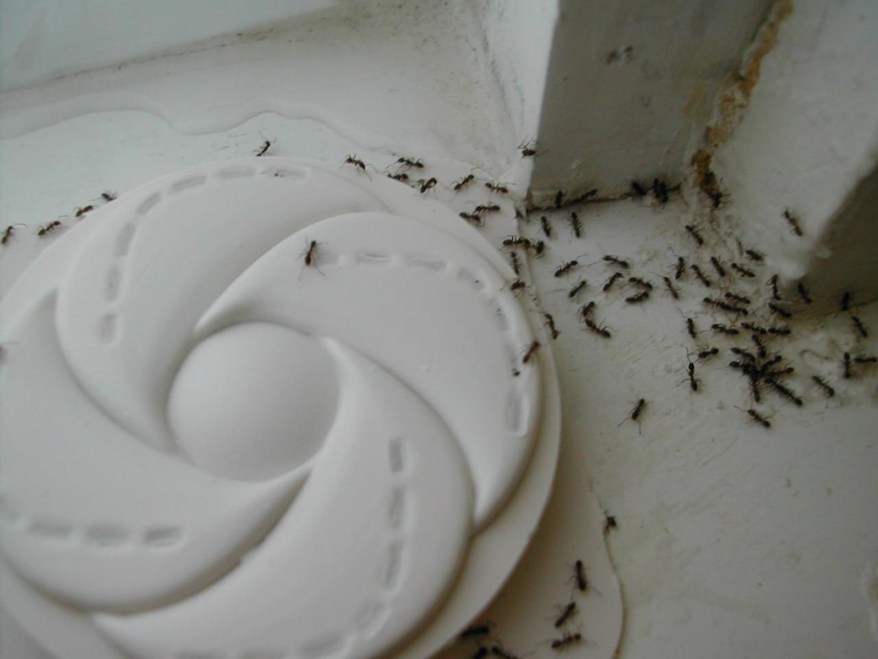 Ловушку для муравьев своими руками как сделать 42