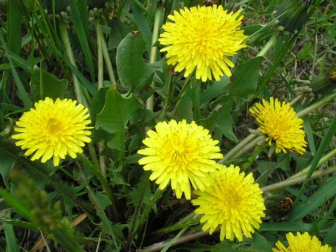 Продукты и травы с антидиабе…