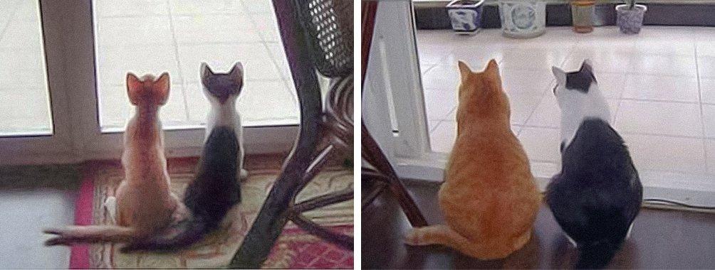"""Очаровательные котейки """"тогда и сейчас"""""""