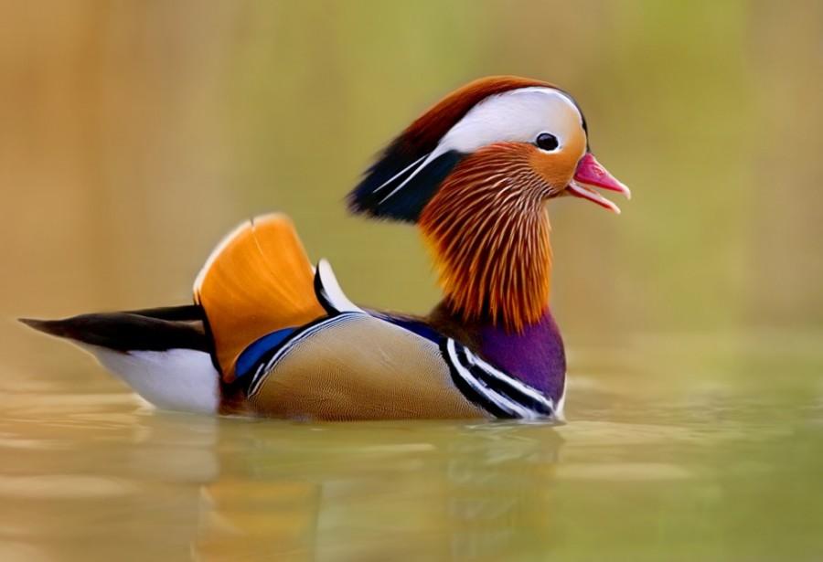 birdie08 Топ 10 самых красивых птиц в мире