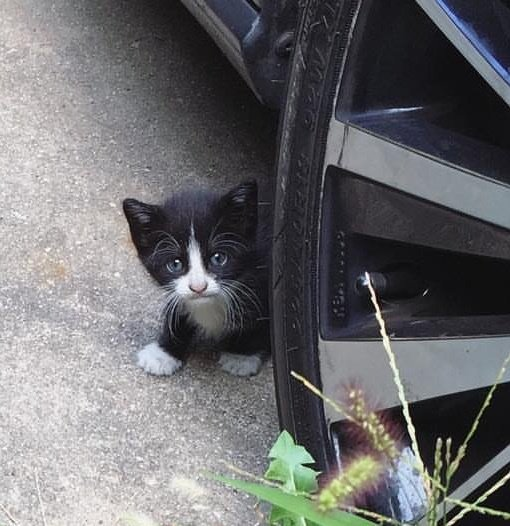 Котёнок проник на задний дво…