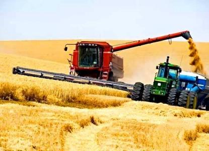 пшеница урожай