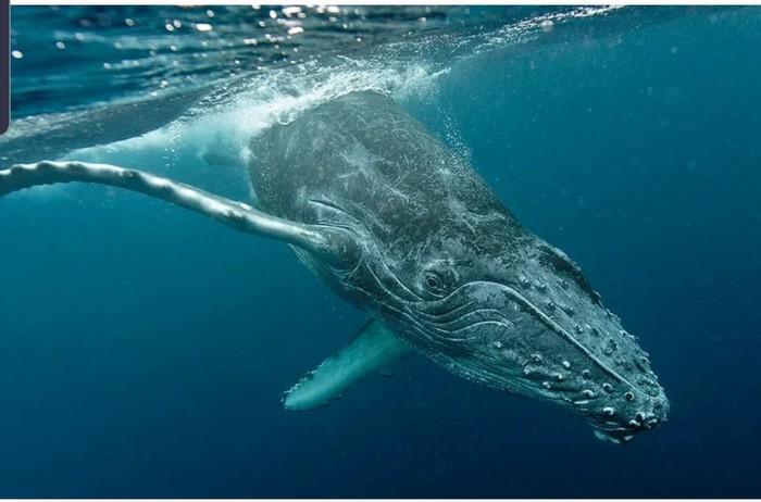 Откуда киты и дельфины берут воду для питья? Морские обитатели, Пресная вода, Наука, Пить, Длиннопост