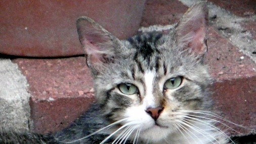 Кошка спасла брошенного в подъезде младенца