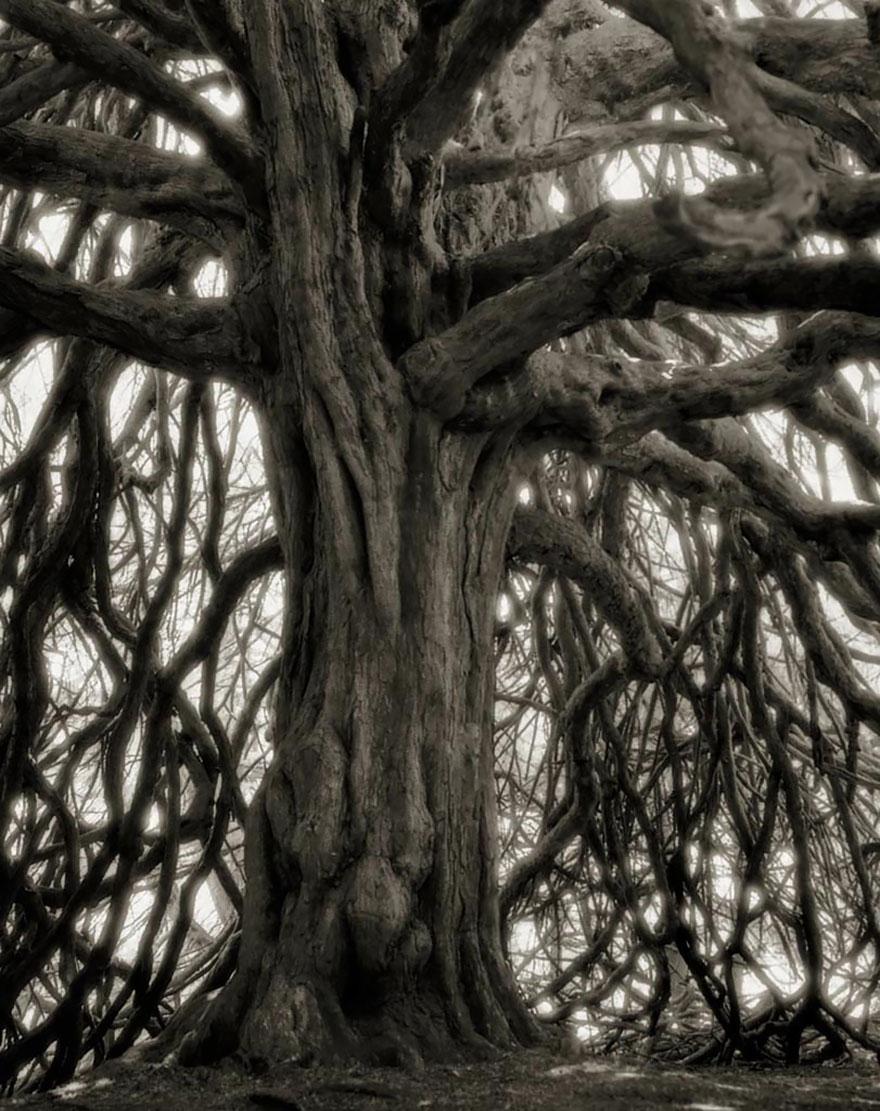 Деревья древние как мир в фотографиях из 14-летнего путешествия-18