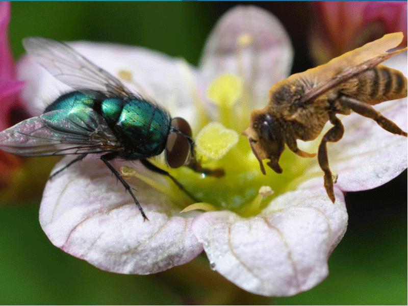 """Притча """"Кто ты - муха или пчела? """""""