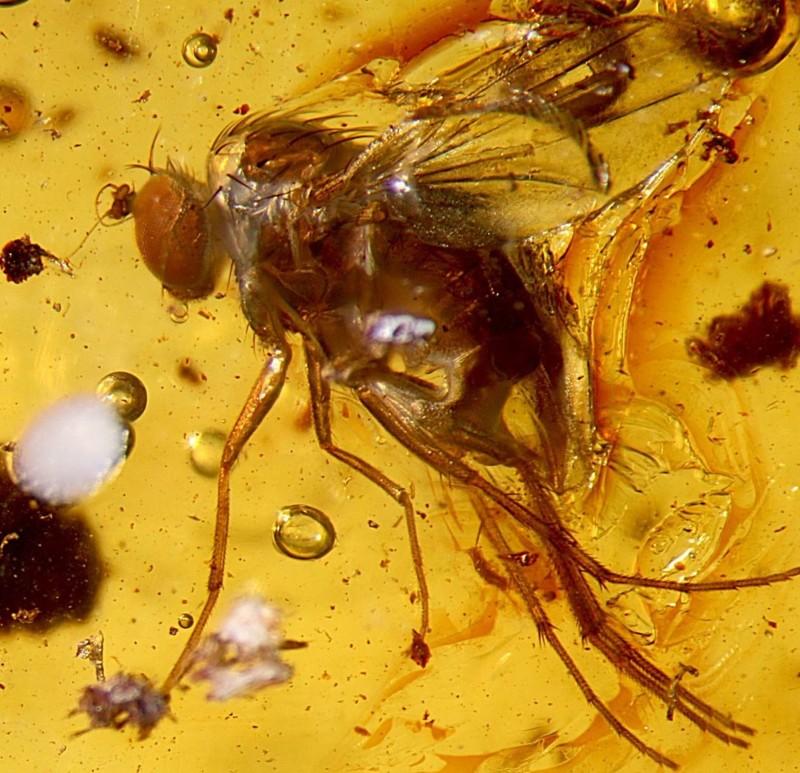 Что будет, если не будет насекомых
